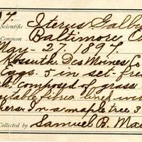 Samuel B. Matson, egg card # 010