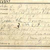 Samuel B. Matson, egg card # 006