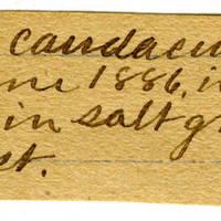 Clinton Mellen Jones, egg card # 822