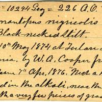 Clinton Mellen Jones, egg card # 532