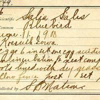 Samuel B. Matson, egg card # 104u