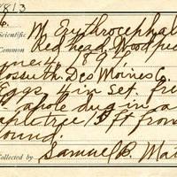 Samuel B. Matson, egg card # 074u
