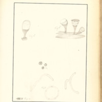 The Slime Moulds of Eastern Iowa by Minna Pryce Humphreys, 1891, Page 218