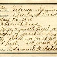 Samuel B. Matson, egg card # 011