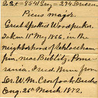 Clinton Mellen Jones, egg card # 736