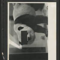 Image 58