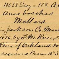 Clinton Mellen Jones, egg card # 915