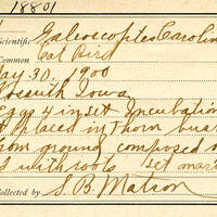 Samuel B. Matson, egg card # 100u