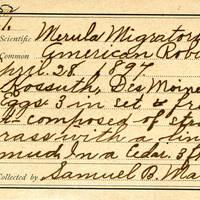 Samuel B. Matson, egg card # 103u