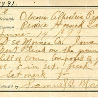 Samuel B. Matson, egg card # 076u