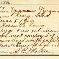 Samuel B. Matson, egg card # 075u