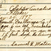 Samuel B. Matson, egg card # 072u
