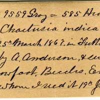Clinton Mellen Jones, egg card # 556
