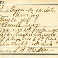 Samuel B. Matson, egg card # 077u