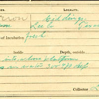 Lewis L Knox, egg card # llk001u
