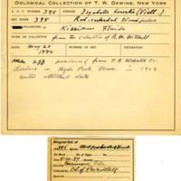Thomas Wilmer Dewing, egg card # 284