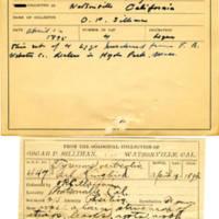 Thomas Wilmer Dewing, egg card # 339