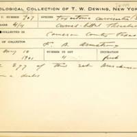 Thomas Wilmer Dewing, egg card # 812u