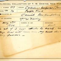 Thomas Wilmer Dewing, egg card # 421