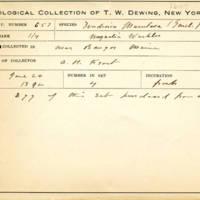 Thomas Wilmer Dewing, egg card # 779u