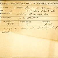 Thomas Wilmer Dewing, egg card # 820u