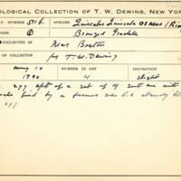 Thomas Wilmer Dewing, egg card # 688u