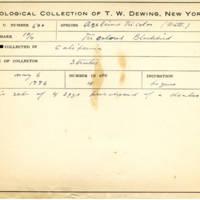 Thomas Wilmer Dewing, egg card # 403