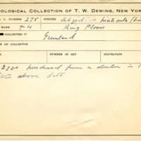Thomas Wilmer Dewing, egg card # 183