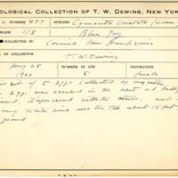 Thomas Wilmer Dewing, egg card # 380