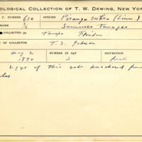 Thomas Wilmer Dewing, egg card # 495