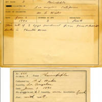 Thomas Wilmer Dewing, egg card # 760u