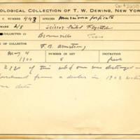 Thomas Wilmer Dewing, egg card # 332