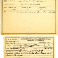 Thomas Wilmer Dewing, egg card # 513