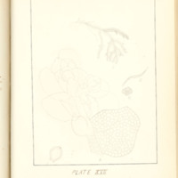 A brief description of nine species of Hepaticae found in the vicinity of Iowa City by Mary F. Linder, 1886, Page 102