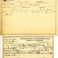 Thomas Wilmer Dewing, egg card # 816u