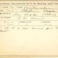 Thomas Wilmer Dewing, egg card # 815u