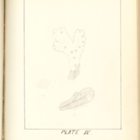 A brief description of nine species of Hepaticae found in the vicinity of Iowa City by Mary F. Linder, 1886, Page 76