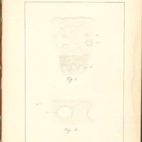 Vegetable secretions and the means by which by are effected by Kate L. Hudson, 1888, Page 68