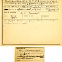 Thomas Wilmer Dewing, egg card # 291