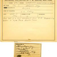 Thomas Wilmer Dewing, egg card # 389