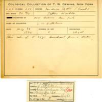 Thomas Wilmer Dewing, egg card # 524