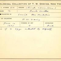 Thomas Wilmer Dewing, egg card # 499