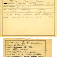 Thomas Wilmer Dewing, egg card # 125