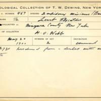 Thomas Wilmer Dewing, egg card # 661u