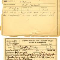 Thomas Wilmer Dewing, egg card # 328
