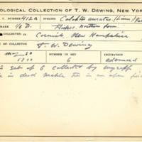 Thomas Wilmer Dewing, egg card # 302