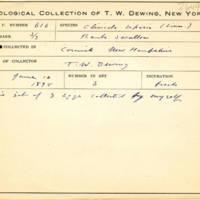 Thomas Wilmer Dewing, egg card # 755u