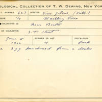 Thomas Wilmer Dewing, egg card # 763u
