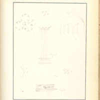 The Slime Moulds of Eastern Iowa by Minna Pryce Humphreys, 1891, Page 191