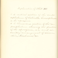A brief description of nine species of Hepaticae found in the vicinity of Iowa City by Mary F. Linder, 1886, Page 99
